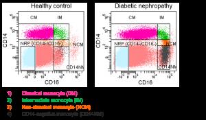 Monocyte conversion in patient cohorts